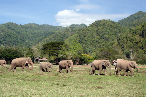 the largest herd