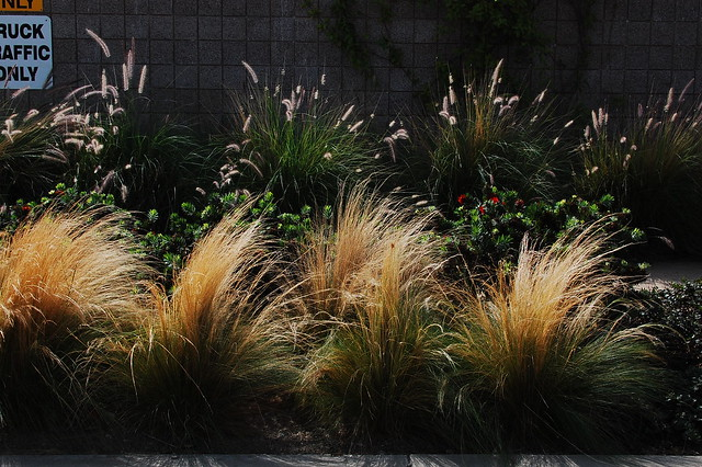 Drought Tolerant Landscape Design Bay Area