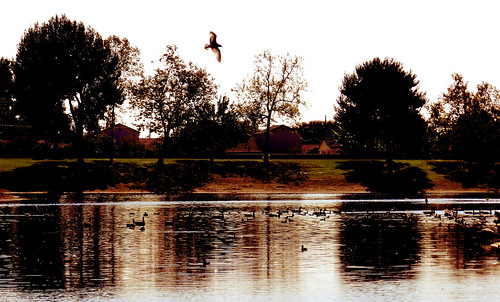 california park lake water birds geese october ducks gardengrove 2011 nikoncoolpixp500
