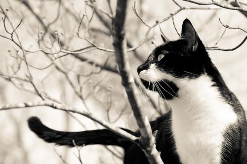 [フリー画像素材] 動物 1, 猫・ネコ, モノクロ ID:201204171000