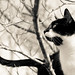 Snickers in tree b&w by loco's photos