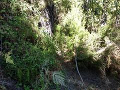 Sentier Capeddu-Sari : la portion de sentier pourrie par les tempêtes juste après la source de Capeddu
