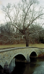 "Antietam Battlefield -  Burnside's Bridge and the ""Witness Tree"""