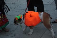 Perro Calabaza