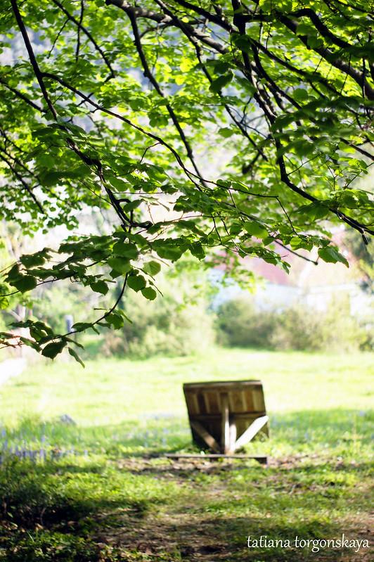 Стол под деревом