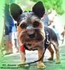 Le chien de Montmartre/The dog from Montmartre