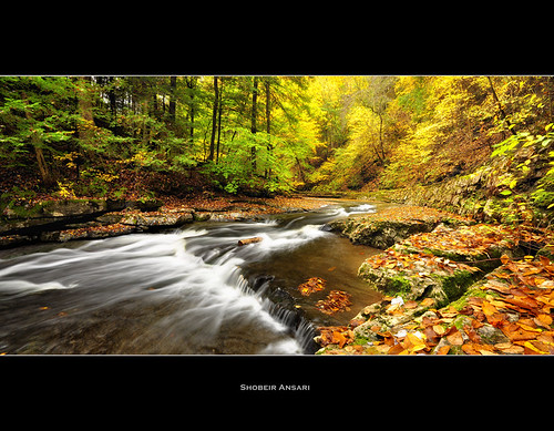 longexposure autumn panorama newyork leaves america creek season landscape waterfall october stream hiking wideangle fallfoliage trail changing covered fallen fingerlakes northeast goldenleaves autumninnewyork panoramiclandscape fillmoreglen autumnlandscape shobeiransari fingerlakesfall newyorkscenic
