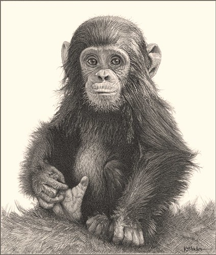 u0026 39 fingers and thumbs u0026 39 - chimp