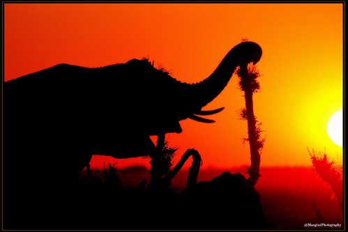 africa sunset animals wildlife safari elephants botswana chobe savuti dragondaggeraward
