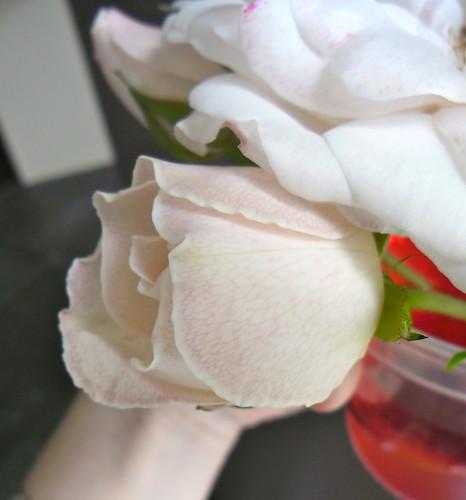 Pink Veins