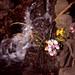 石像の花々