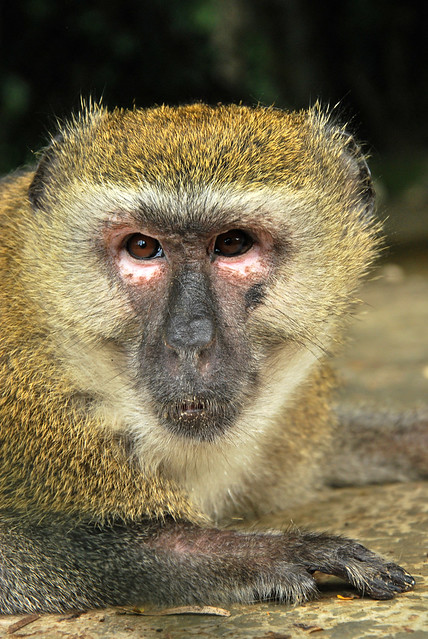 3 PREMIO_El Domador - Mono Distraído - (1) 2