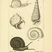 Atlas des mollusques