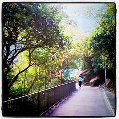 六點出門,搭地鐵去金鐘,穿香港公園上山,就為了去寶雲道慢跑