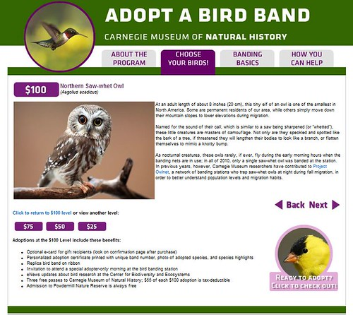 Adopt A Bird Band by Megan Lorenz