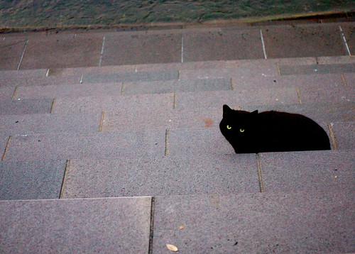 黒猫に遊んでもらった