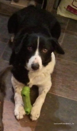 [Updated] Thu, Dec 8th, 2011 Lost Male Dog - Ballykeane, Geashill, Offaly
