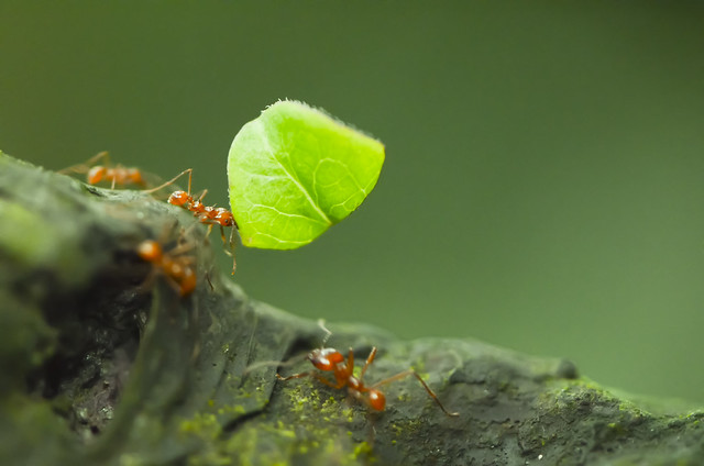 Working ants - photo#16