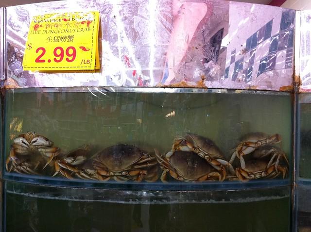 Live *Dungeonus* Crab