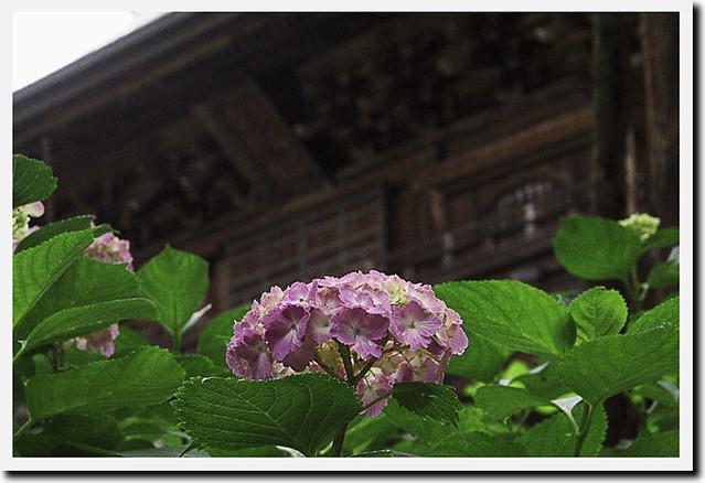 110615_123902_北鎌倉_円覚寺