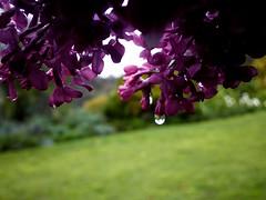 Victorian Garden_25
