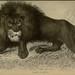 Lions, tigers, &c., &c