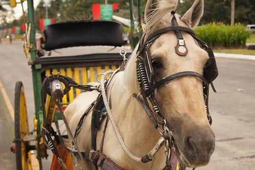 Camera-Shy Horse