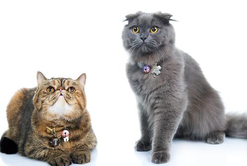 I gatti degli sposi