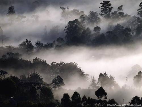mañana forest dawn colombia explore bosque niebla antioquia laceja touraroundtheworld blinkagain