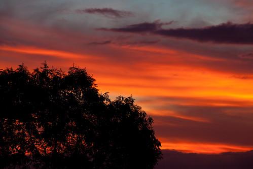 sun tree colors sunrise canon philippines zamboanga 5dii