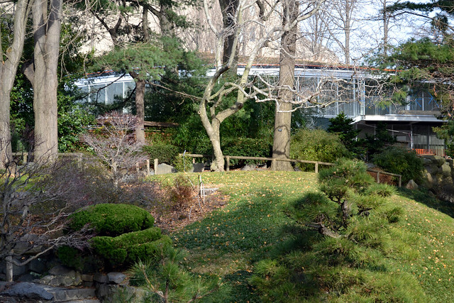 BBG's Visitor Center is nestled into the hillside behind the the Japanese Hill-and-Pond Garden; spring leaf-out will screen it from view. Photo by Elizabeth Peters.