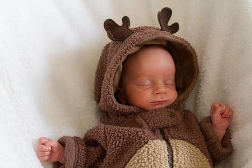 Reindeer-002