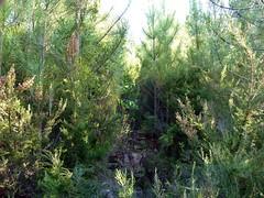 Punta Radichella par la sente de chasseurs : la sente vers le haut dans le bas du versant