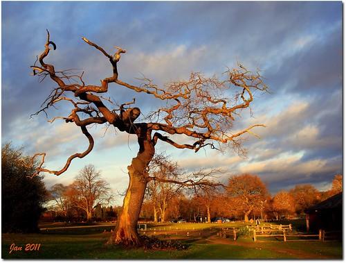 Sunlit tree by Jan 130