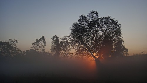 morning winter india fog sunrise dusk artprint dehradhun
