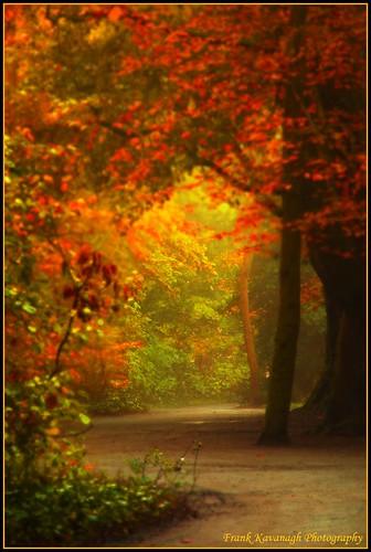autumn trees kilkenny ireland sun colour castle fall nature leaves landscape niceshot shadows seasonal parks eire trail backlit emeraldisle irlanda lanes kilkennycastle irishphotographers kilkennyphotographers kilkennyphotographicsociety mygearandme blinkagain frankkavanaghphotography
