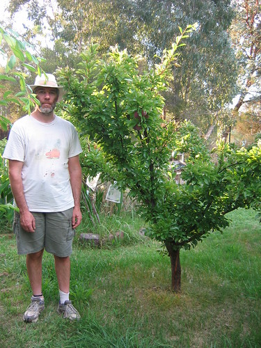 Plum tree at our community garden