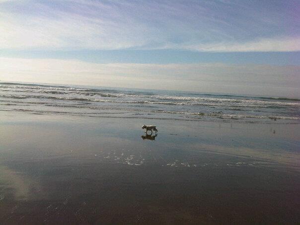 Pacific Ocean Schnauzer