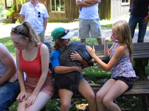 wombat hug
