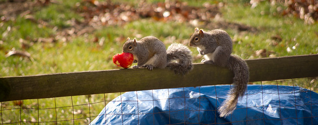Stingy Squirrel