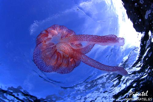 Medusa de hoy en gran compañía