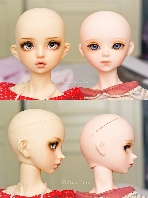 head size comparisons