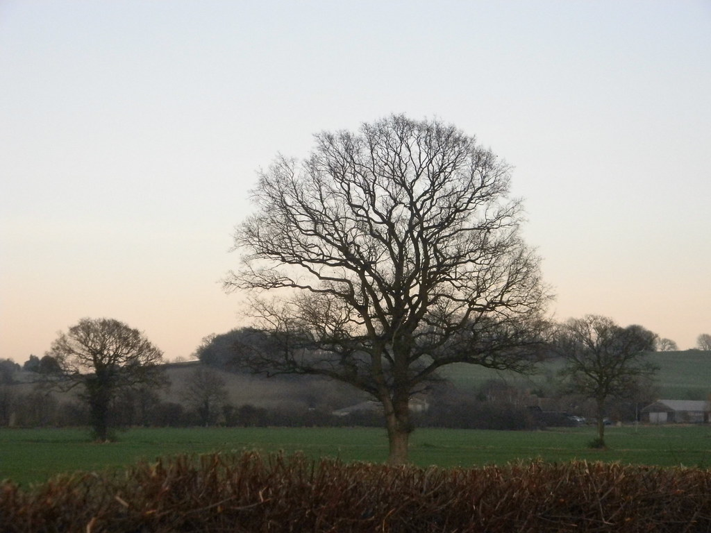 Tree Pluckley Circular