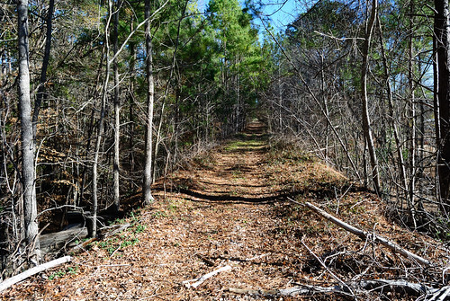 railroad trestle abandoned train wooden branch texas pacific timber railway row grade southern disused rockland easttexas rightofway zavalla