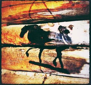 shadow horse (15)