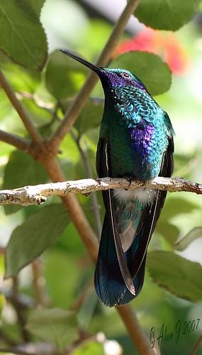 birds canon florida 7d mygearandme 100mmmacrof28lisusm