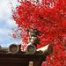 2010 京都 秋:東福寺