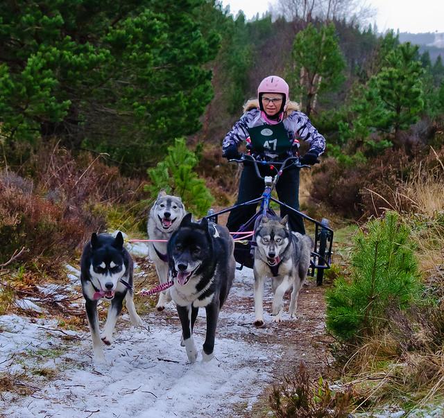 Arden Grange Dog Food Analysis