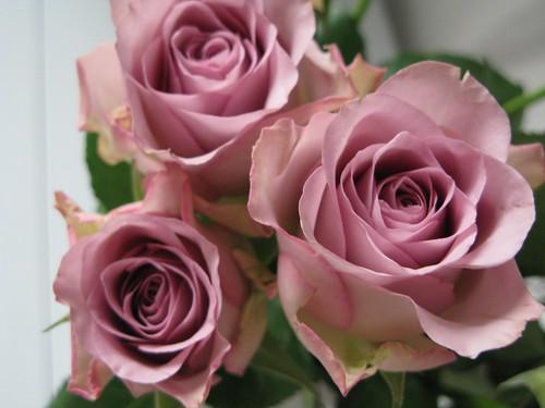 les fleurs roses Gallery