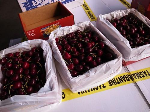 塔斯馬尼亞櫻桃,澳洲櫻桃
